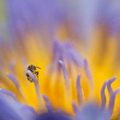 Peter-Meyer-Photography-Fraser-Island-PMFA0833